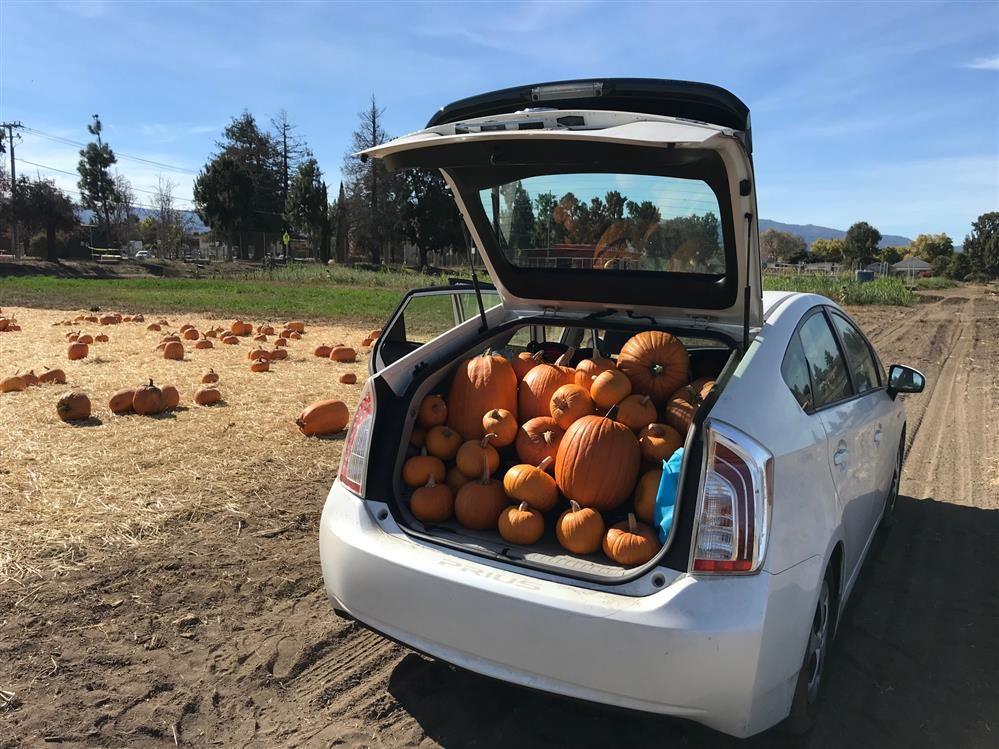 Prius full of pumpkins